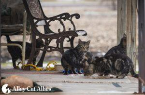 Alley Cat Allies Heads to Iowa to Save Cats