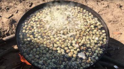 Watch This Indian Food Hero Make Curry With 500 Quail Eggs