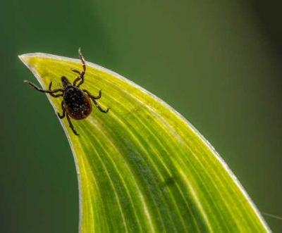 Doctor finds tick in man's eye after he feels persistent irritation