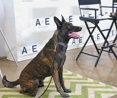 K-9 Flex is Top Dog at A&E's 'Live PD'