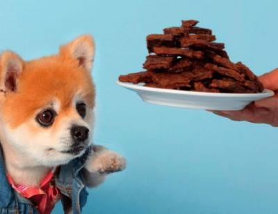 Can Dog Treats Make A Dog Sick?
