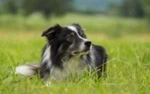 10 Dog Health Myths Pet Parents Should Stop Believing