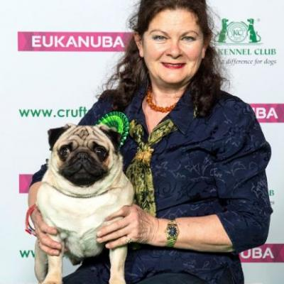 """Crufts 2019: the """"cock-eyed, cousin-kissing"""" Pug that won Best of Breed"""