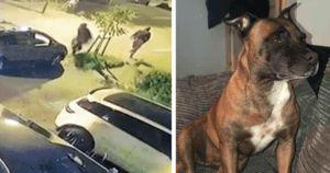 Brave Dog Scares Off Four Thieves Holding Machetes