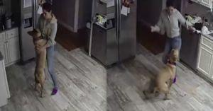 Man Discovers His Dog and Girlfriend Dancing While He's Away