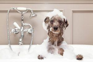 Winter Dog Baths: 7 Ways to Clean Your Dog During Cold Weather