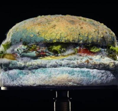 Burger King Hopes Your Hatred of Preservatives Is More Powerful Than Your Hatred of Moldy-Ass Food
