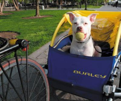 Battery Park City is NYC's Most Dog-Friendly Neighborhood
