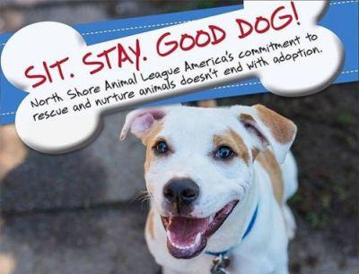 Sit. Stay. Good Dog! Register today for our professional pet
