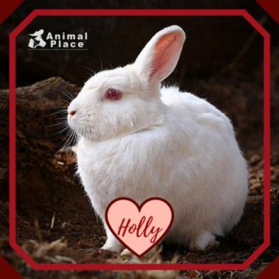 Before she came to Animal Place, Holly was raised for her