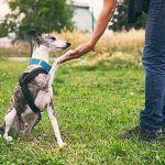 Finding Qualified Professional Animal Trainers