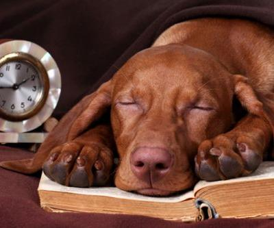 Adjusting Your Clock for Daylight Saving Time Might Mess with Your Dog's Head