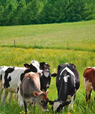 The most beneficial trees for livestock