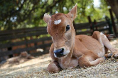 Nonhuman animals suffer gravely and fatally from most of