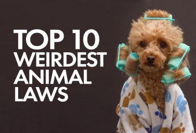 Top 10 Weirdest Animal Laws on the Books