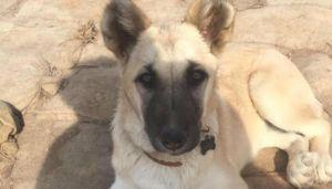The Rescue Story Of A Syrian Stray - As Told By Her Soldier