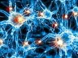 Smart people have bigger brain cells, landmark discovery finds
