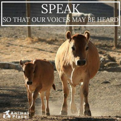Other animals have voices, but they are too often locked away