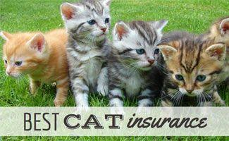 Best Cat Insurance 2017: Who's The Pick of the Litter?