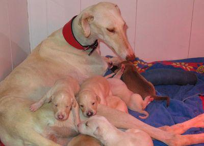 A dog with a broken leg walked two miles with vets to lead them to her puppies