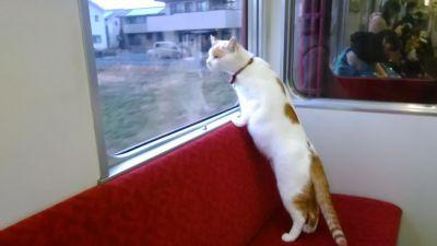 Japan's First Cat Cafe Train Combines Eating, Traveling, and Feline Bonding