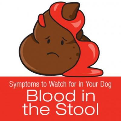 Symptoms to Watch for in Your Dog: Blood in the Stool
