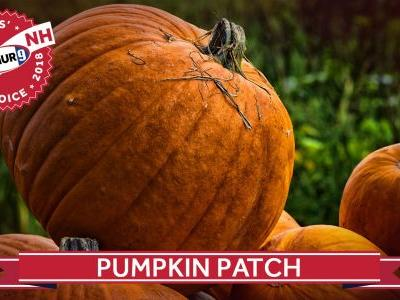 Viewers' Choice 2018: Best pumpkin patch