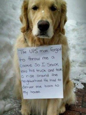 Dog Sneaks Into UPS Driver's Truck For Joy Ride
