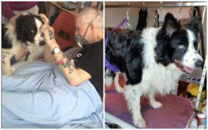 Dog Who Visited Dying Owner In Hospital Gets Groomed Before Attending The Funeral