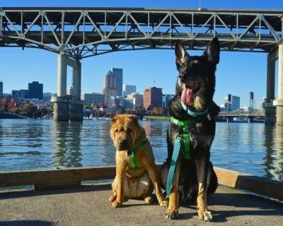 Oregon's Top Pet Friendly Attraction: Portland's Parks