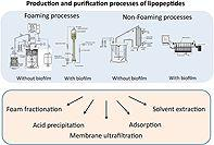 Microbial lipopeptide production and purification bioprocesses, current progress and future challenges