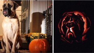 Dog-O'-Lanterns Are All The Rage This Halloween - Here Are 20 Of Our Favorites