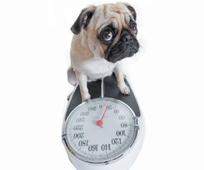 Wondering How Much to Feed a Dog? Let's Talk How Many Calories Dogs Need