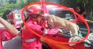 Malaysian Firefighters Pull Trapped Dog From Ravine
