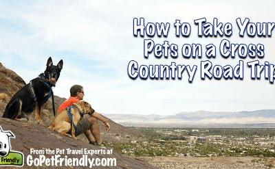 How to Take A Cross Country Trip With Pets