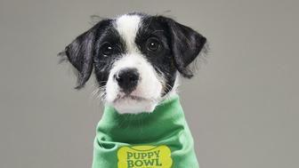 These Pups Rescued From Puerto Rico Are Part Of This Year's Puppy Bowl