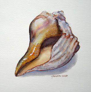 Conch Shell Sketch - SOLD