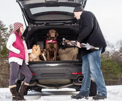 Essential Winter Gear for Dog Travel