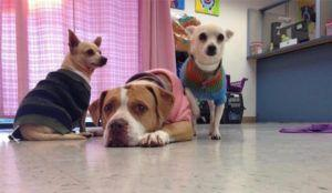 Blind Dog And Her Two Friends Get The Miracle They Deserve