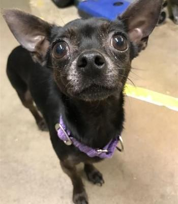 """""""LAUREL"""" and """"TANSY"""" Bonded Pair Chi mix"""