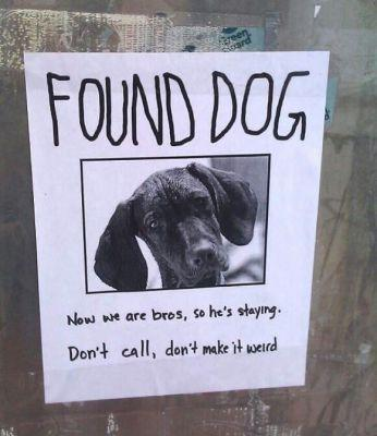 10 Hilarious Lost-Dog Signs