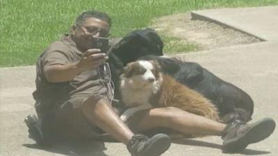 'Best UPS Man On The Planet' Caught Taking Selfies With Local Dogs