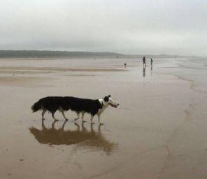 14 Hilarious Panorama Dog Pic Fails - Try Not To Laugh