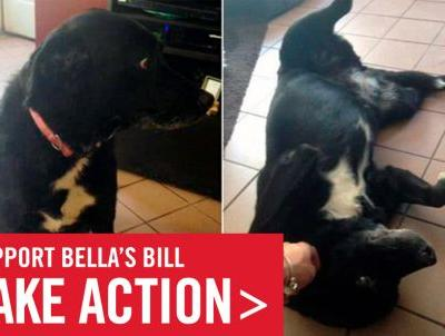 Bella's Bill - A Major Step Forward for New York's Animals