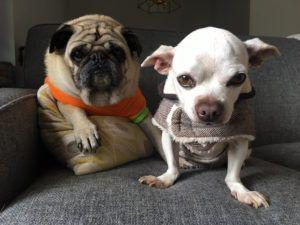 """Senior Dog """"Shuts Down"""" In Shelter Until A New Pal Changes Everything"""
