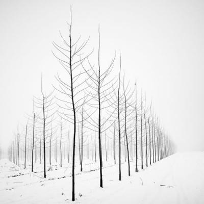 Black and White Photographs Capture the Striking Appearance of Bare Trees Against Snow-Filled Landscapes