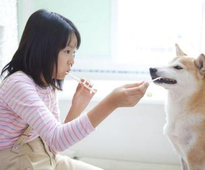 A Dog Dental Care Guide That Every Pet Parent Can Do