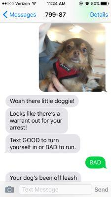 Is Your Fuzzy Outlaw A BAD MOTHER PUPPER?