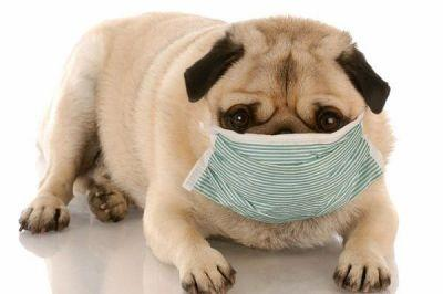 Can You Give a Dog Imodium, Kaopectate or Pepto-Bismol for His Upset Stomach?