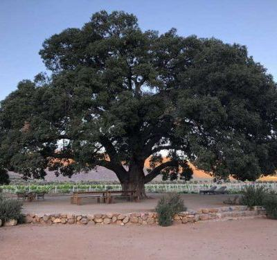 Couple ordered to pay nearly $600,000 for uprooting tree